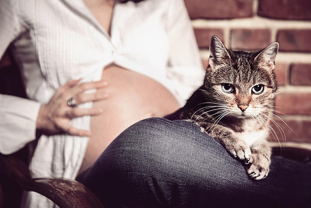 kot patrzy w obiektyw